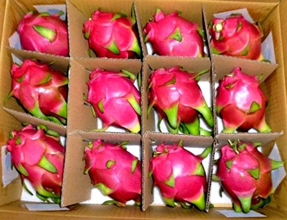 Thùng carton đựng trái cây, nông sản xuất khẩu